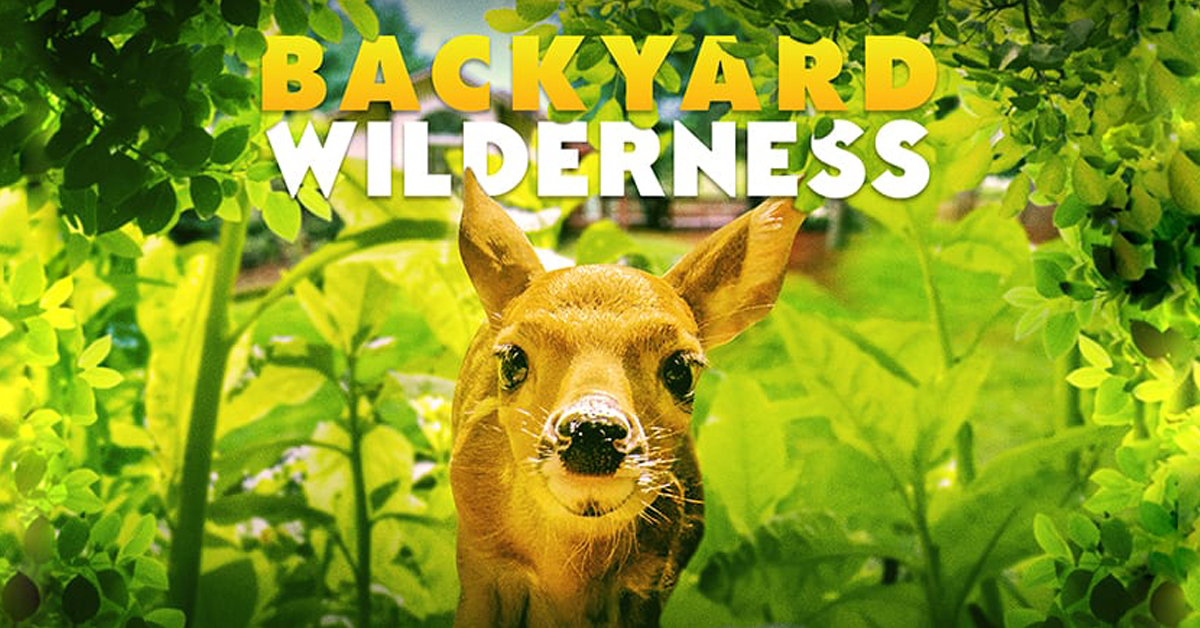Backyar Wilderness at the Cradle of Aviation Museum